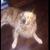 robo_doggo
