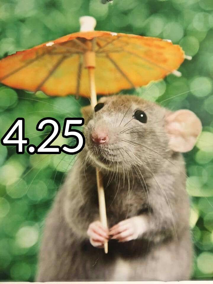 rat425.1.jpg