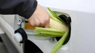 Corn Fuel!