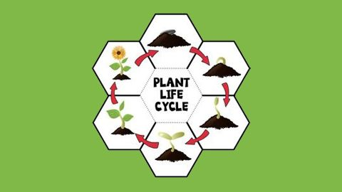 plants_mod_io.jpg