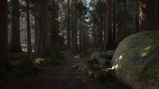 Redwood Reborn
