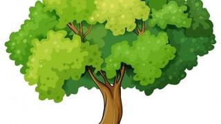 8 Stunden Baumwachstum