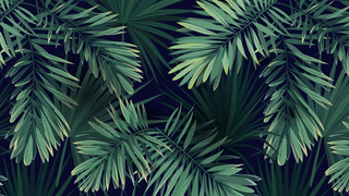 Griptape / Deck Florale by [FR]Anthony