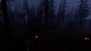 pineforestnight