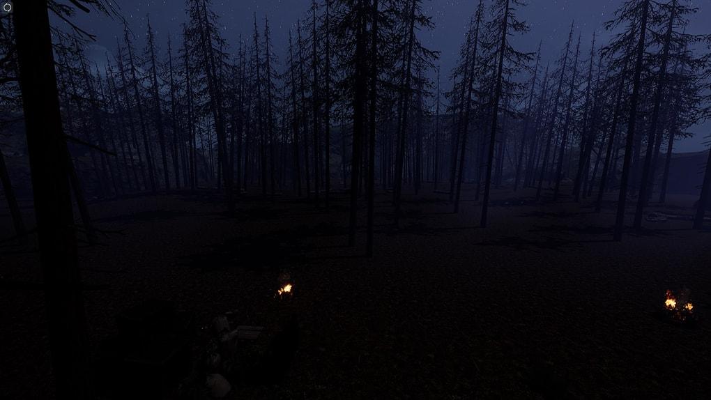 pineforestnight.1.jpg