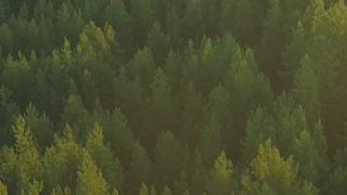 OPPO森林